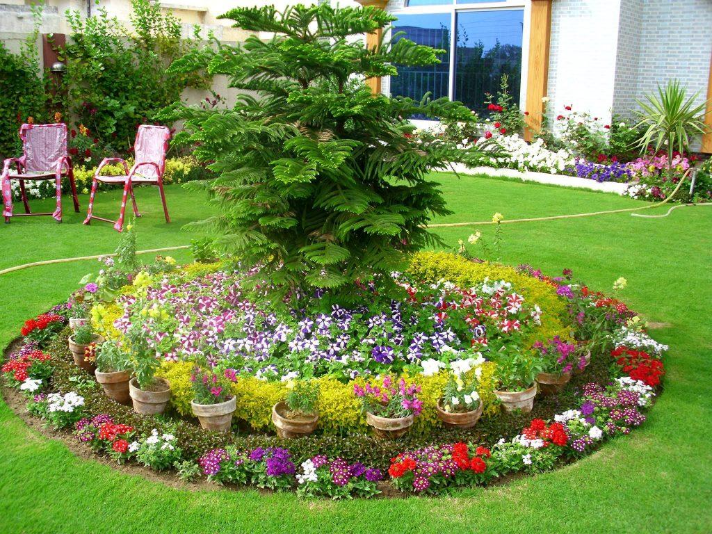 Best Flowering Shrubs for Hedges | Garden Shrubs