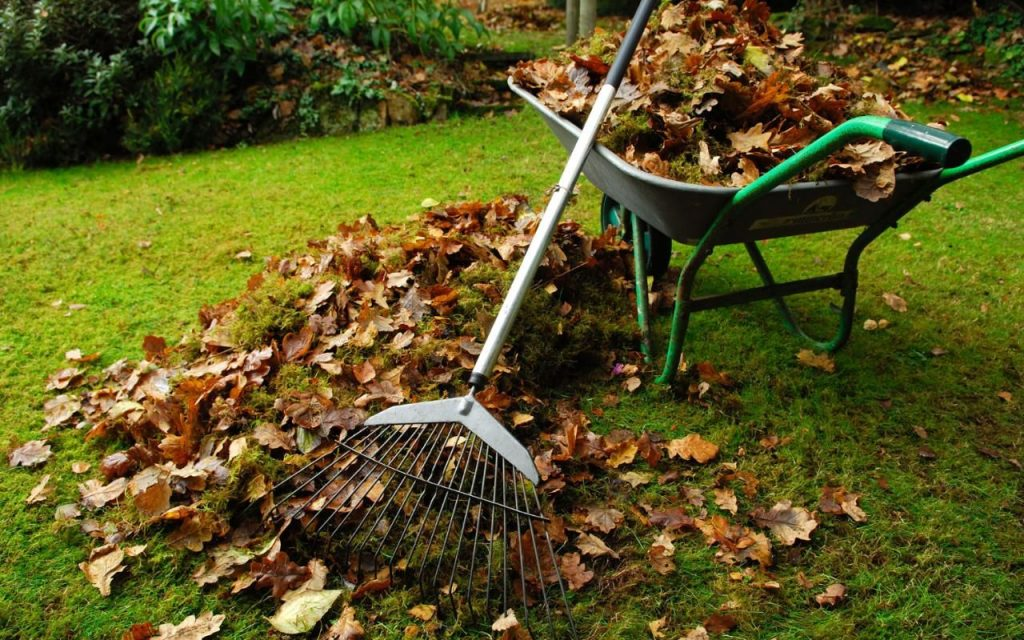 Garden Clearance Top Tip: When In Doubt, Chuck It Out!